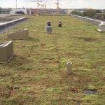 GrowTek VM30 sedumtag har en maks vægt på ca. 52kg og kan tilbageholde op til 45ltr regnvand pr kvm.