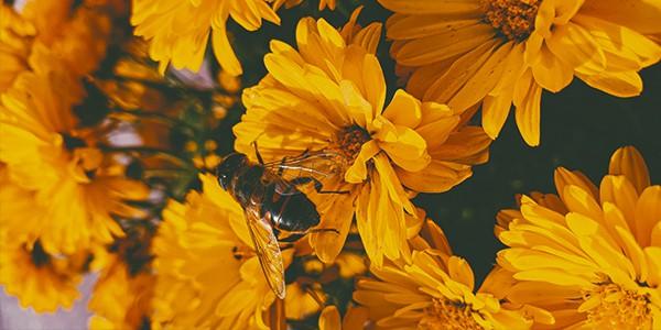 Grønne tage og bier