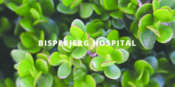 Sedum tag lagt på Bispebjerg Hospital
